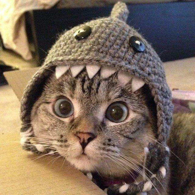 Maak Van Je Kat Hond Of Misschien Wel Kindje Een Haai