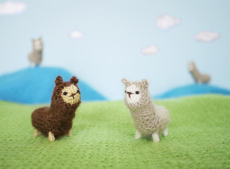 Deze twee alpaca's