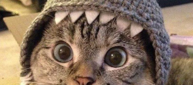 Maak van je hond, kat of misschien wel kindje een haai!