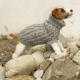 Leuke truien breien voor de hond of misschien zelfs de kat
