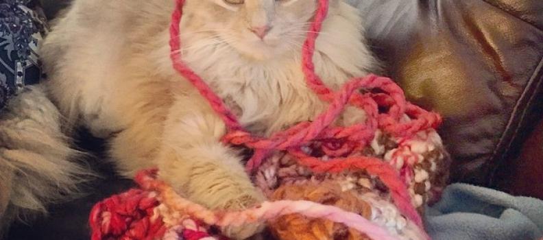 9 Katten die helemaal klaar zijn met breien